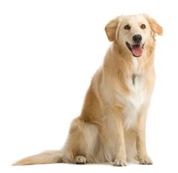 Приснилась собака
