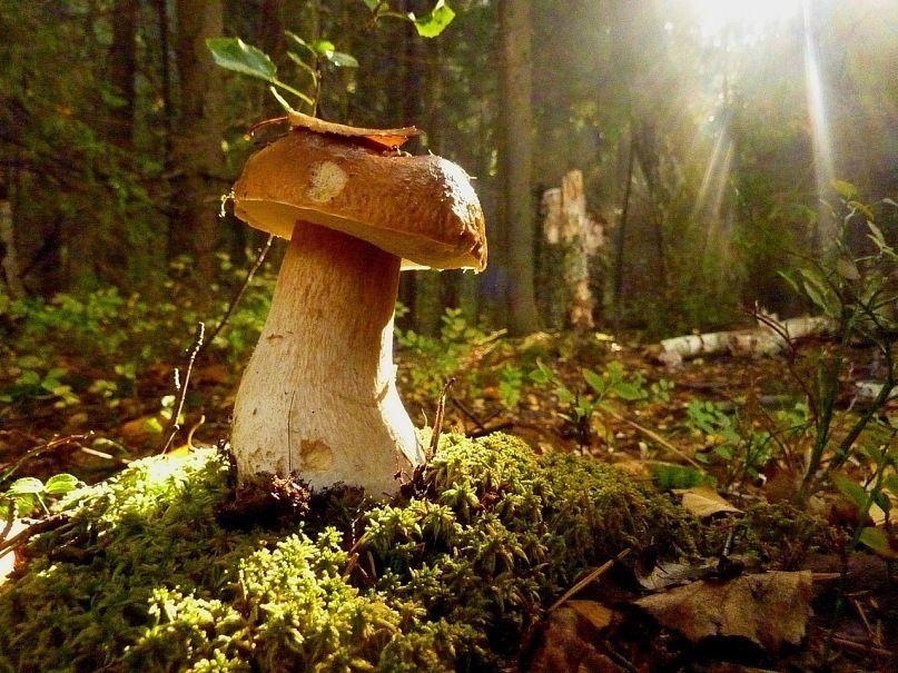 10 фактов о грибах, которые вы наверняка не знали